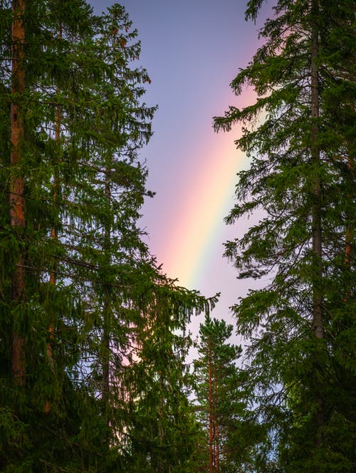 A rainbow brings new life after a storm. To help weather the storm and ride a rainbow there are virtual sessions for well-being coaching and distance healing with Bruce Markow LMT (212) 721-8640